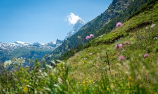 Pearlwater is deeply rooted in the Swiss Alps